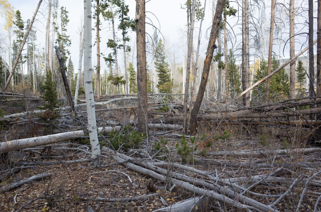 The heavy timber and deadfalls made travel difficult