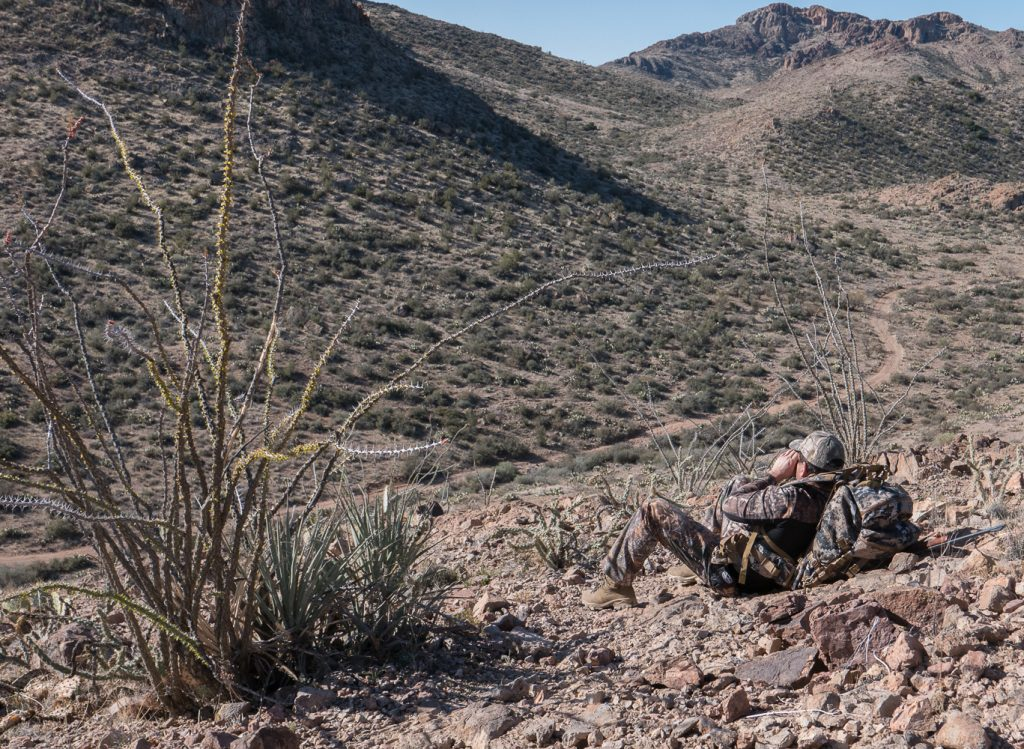 Glassing for Javelina in Arizona's high desert